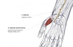 мышца отводящая большой палец кисти - сзади