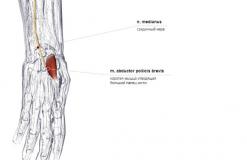 мышца отводящая большой палец кисти - спереди-латерально