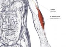 Плечелучевая мышца - спереди