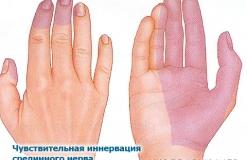 Срединный нерв - N. Medianus - Иннервация (чувствительная)