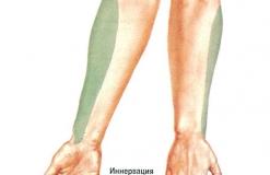 Наружный кожный нерв предплечья - N. Cutaneus antebrachii lateralis - Иннервация