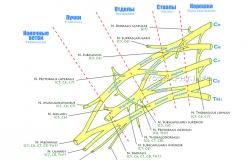 Плечевое сплетение - Схема